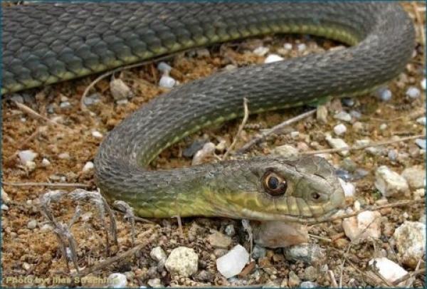Τραγικό παιχνίδι της μοίρας - Φίδι σκότωσε μητέρα και το μωρό που θήλαζε με ένα μόνο δάγκωμα