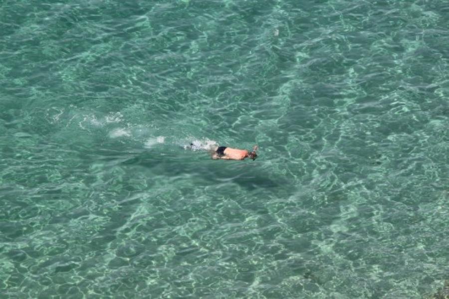 Συναγερμός για μέδουσα δολοφόνο στις παραλίες της Μεσογείου