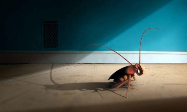 Το κόλπο με τον καφέ για να διώξετε τις κατσαρίδες από το σπίτι