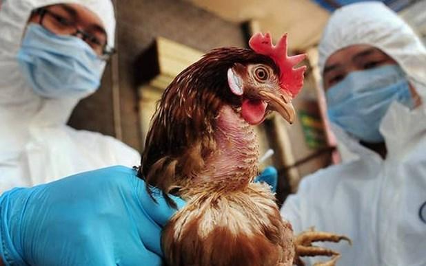 Σε αυξημένη επιφυλακή για την γρίπη των πτηνών και η Περιφέρεια Θεσσαλίας