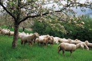 Πληρωμή του έτους 2012 των δικαιούχων της Δράσης 1.2 «Βιολογική Κτηνοτροφία» του Μέτρου 2.1.4.