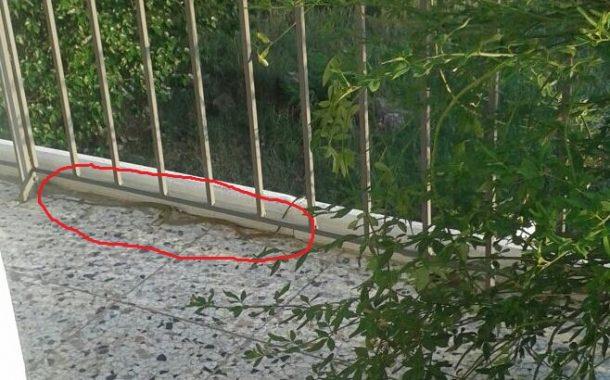 Φίδι στο μπαλκόνι 2ου ορόφου στα Φάρσαλα (ΦΩΤΟ)