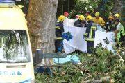 Τραγωδία σε προσκύνημα για την Παναγία: Δέντρο καταπλάκωσε και σκότωσε 11 πιστούς
