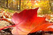 Από αύριο ξεκινά «επισήμως» το φθινόπωρο – Στις 23:02 η φθινοπωρινή ισημερία