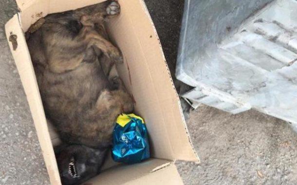 Πέταξαν νεκρό σκυλί μπροστά στο 1ο Γυμνάσιο Τυρνάβου