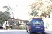 Δέντρο ξεριζώθηκε στον 11ο Παιδικό Σταθμό Λάρισας (ΦΩΤΟ)