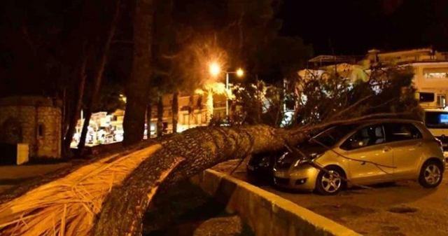 Ο αέρας ξερίζωσε δέντρα και καταπλάκωσε αυτοκίνητα - ΦΩΤΟ