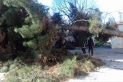 Πολλά τα προβλήματα από τους ισχυρούς ανέμους στη Λάρισα