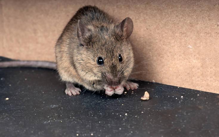 Ποντίκια έκαναν… επίσκεψη σε κτίριο του ΑΠΘ
