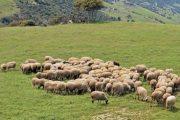 Εως 11 Απριλίου οι αιτήσεις για βιολογική κτηνοτροφία - 29 εκατ. ευρώ στη Θεσσαλία