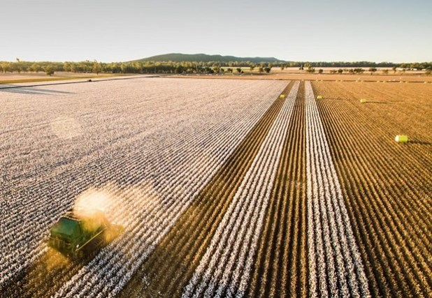 Καλές προοπτικές για περισσότερα στρέμματα βαμβακιού – Αύξηση 10% στη Θεσσαλία