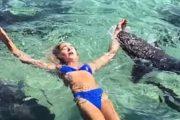 Ήθελε να βγάλει την τέλεια φωτογραφία και τη δάγκωσε καρχαρίας (Video)