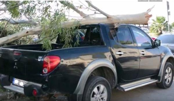 Δέντρο έσπασε απ' τον αέρα και καταπλάκωσε αυτοκίνητο (Video)