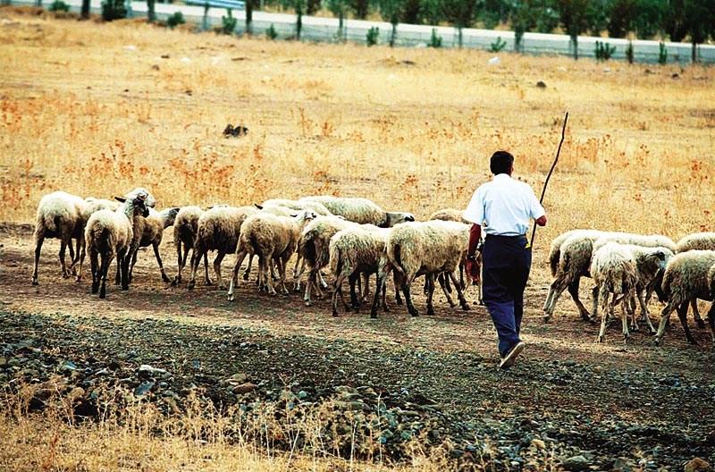 Η Περιφέρεια Θεσσαλίας καλεί τους τοπικούς οινοποιούς