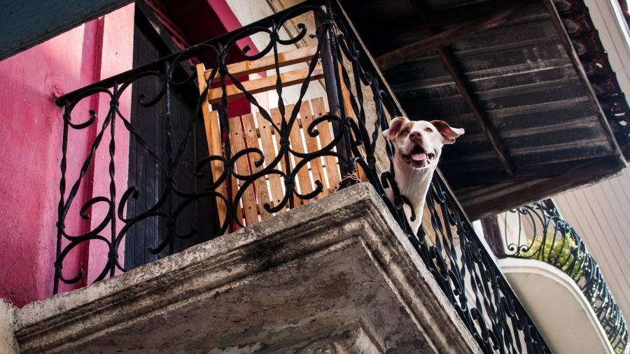 Έκλεισε τον σκύλο της στο μπαλκόνι με 35 βαθμούς Κελσίου – Συνελήφθη η ιδιοκτήτρια