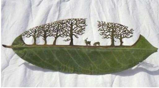 Σκαλίζοντας φύλλα δέντρων