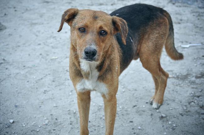 Άγνωστος μαχαίρωσε σκύλο στον Τύρναβο! – Τον αναζητά η Aστυνομία