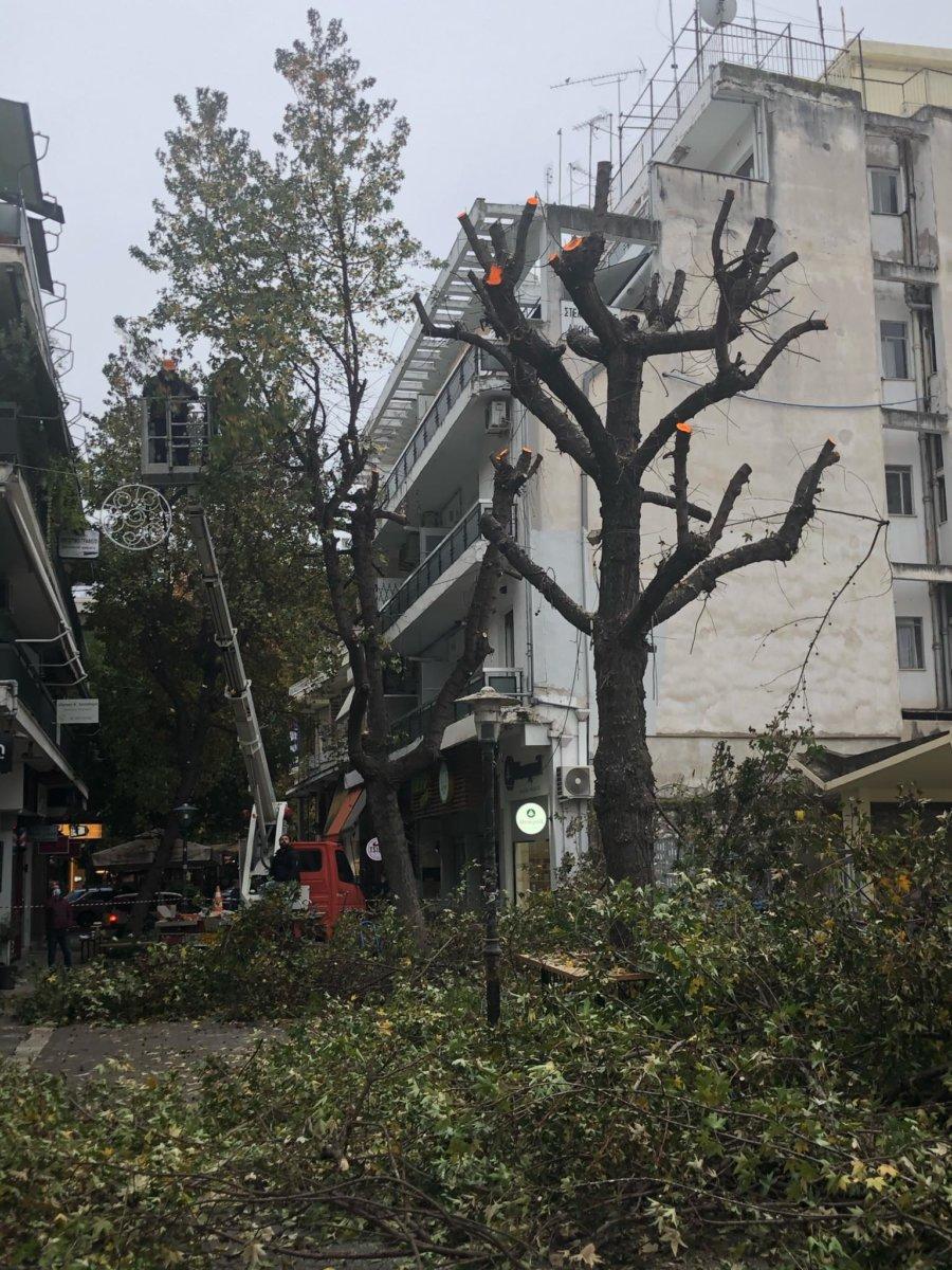 Λάρισα: Κλάδεμα των δέντρων μπροστά στην Στρατολογία (φώτο)