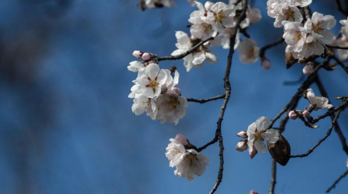 Λάρισα: Λιακάδες και ανοιξιάτικος καιρός μέχρι το Σάββατο – Τι καιρό θα κάνει την Κυριακή