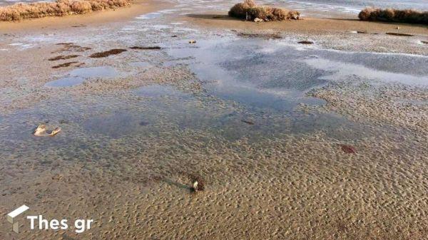 Άμπωτη : Υποχώρησαν τα νερά από τον Θερμαϊκό μέχρι το Καβούρι – Το σπάνιο φαινόμενο
