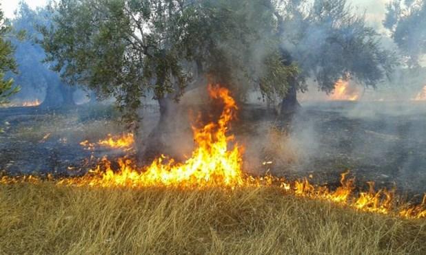 Φωτιά στη Λάρισα - Επιχειρούν 13 οχήματα και 28 πυροσβέστες