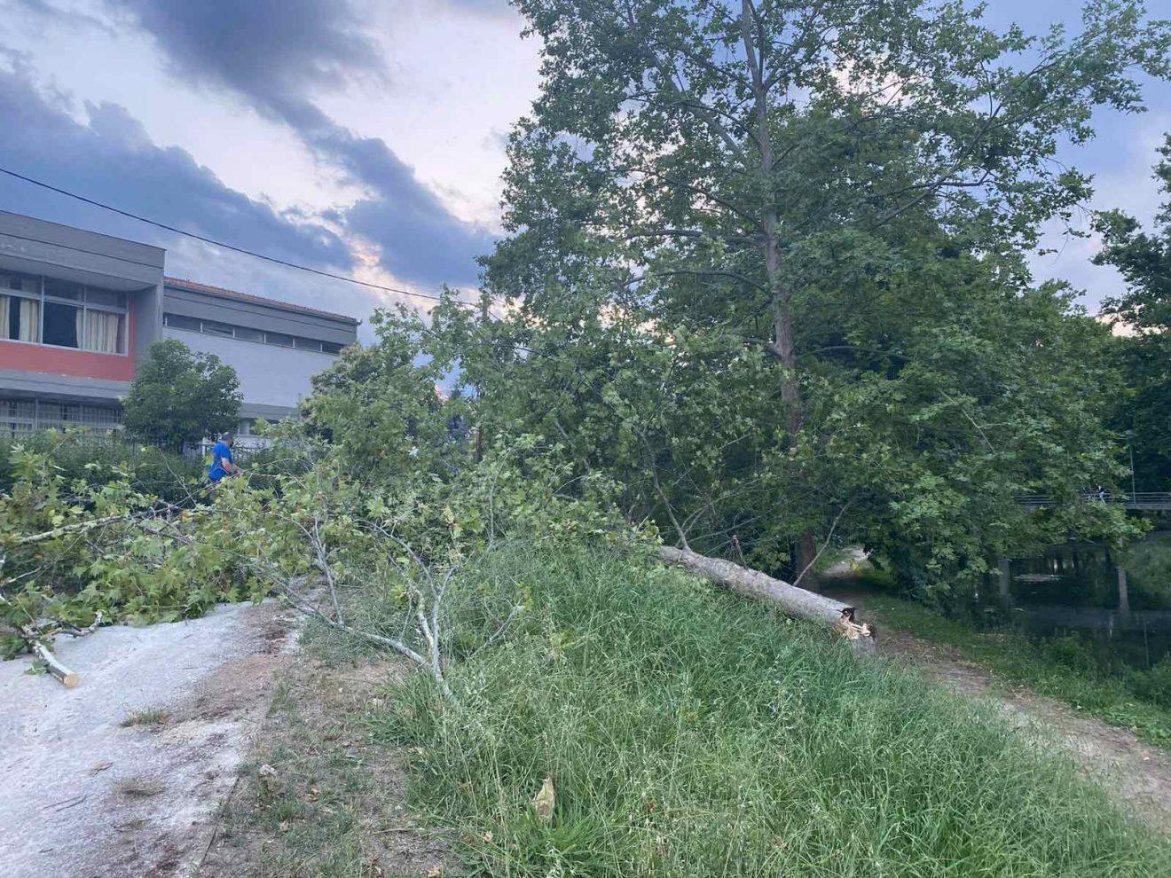 Ο αέρας ξερίζωσε δέντρο στις όχθες του Ληθαίου (φώτο)