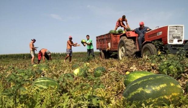 Λάρισα: Αγωνία στα χωράφια – Ακόμη περιμένουν τους εργάτες γης