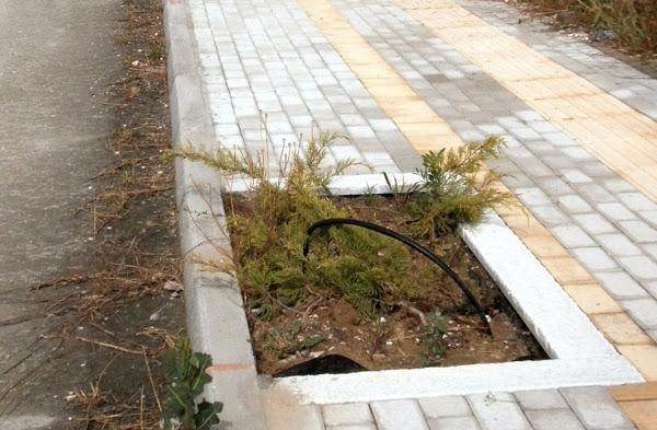 Κλέφτες καλλωπιστικών δέντρων! - Αφαίρεσαν μανόλιες στον περιφερειακό της Ελασσόνας